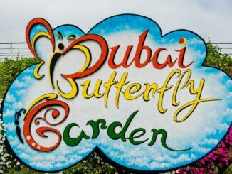 dubai-butterfly-garden