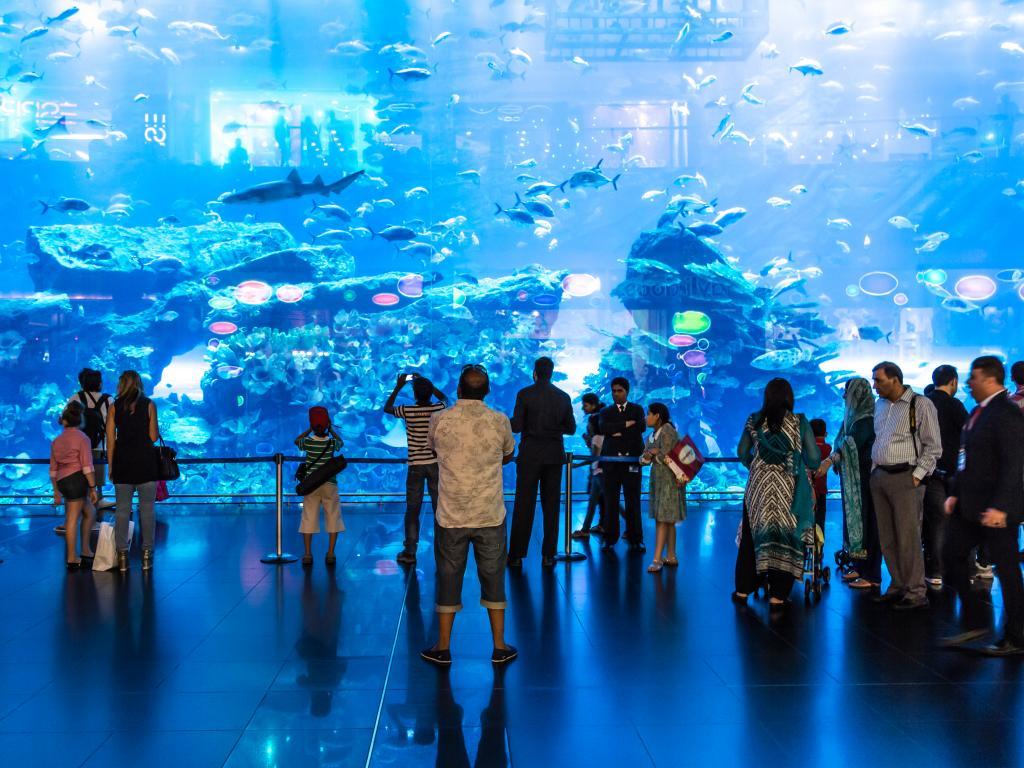 Die Frontscheibe vom Dubai Aquarium
