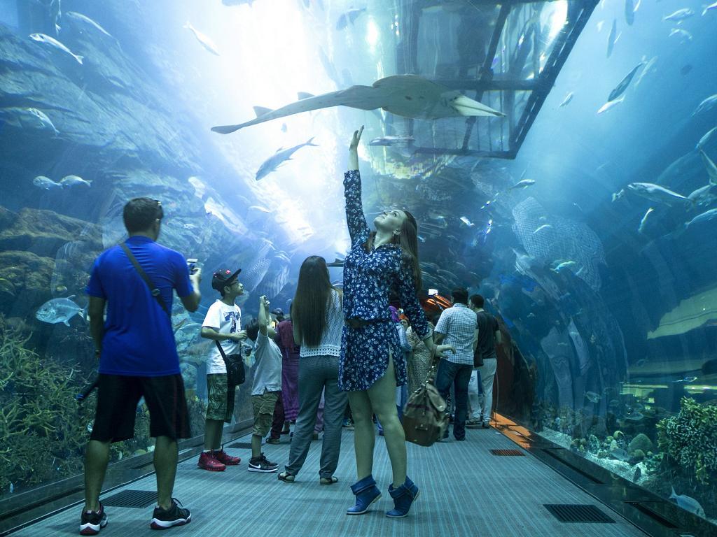 Ein Hai im Dubai Aquarium