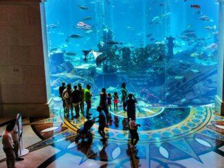 Dubai Lost Chambers Aquarium