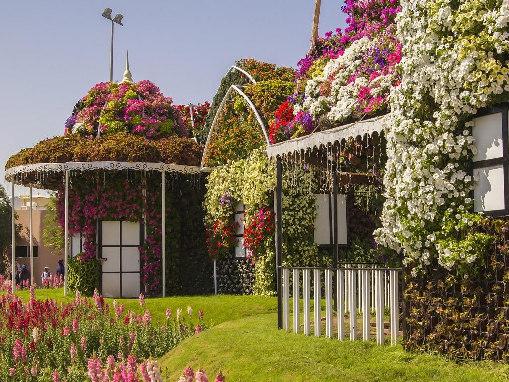 Blumen im Dubai Miracle Garden